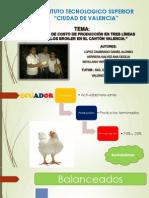 Pollos Broiler IV Semestre