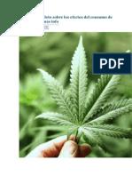 Informe Completo Sobre Los Efectos Del Consumo de Marihuana y Más Info