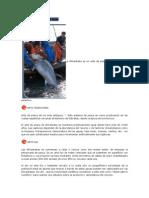 Pesca Tradicional Del Atún