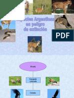 Especies en peligro de extincion Ailín