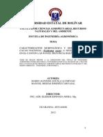 Caracterizacion Morfologica Cacao BOLIVIA