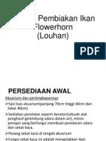 Proses Pembiakan Ikan Flowerhorn