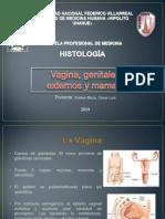Genitales Externos, Vagina y Mamas