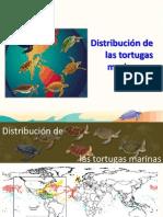 Distribución de Las Tortugas Marinas en América