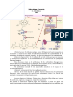 Fisiopatología Digestiva Ictericia