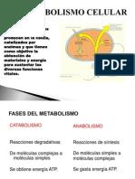 BIO 141 Metabolismo Celular
