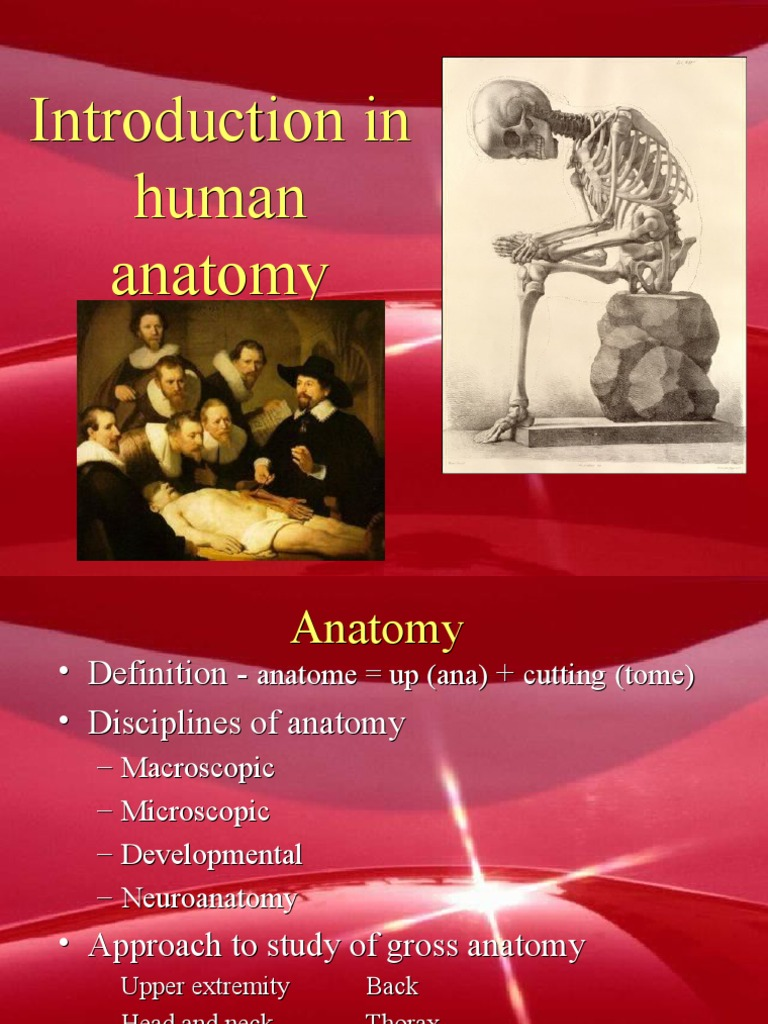 Introduction In Human Anatomy Anatomical Terms Of Location