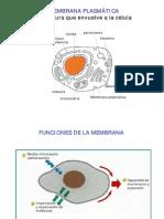 biologia celular - clase 04