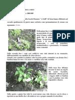 """Relazione sulle attività del percorso """"L'orto"""" - Classe 3° primaria - a.s. 2008/09"""