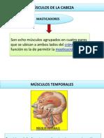 Musculos de La Cabeza y Cara