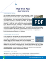 Blue-Green Algae Info Sheet