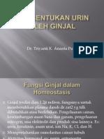 Pembentukan Urin Oleh Ginjal