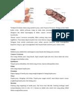 Anatomi Penis Dan Vagina