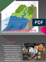 Ciclo Del Fósforo Presentacion