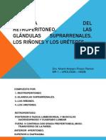 Anatomia Del Retroperitoneo, Las Glándulas Suprarrenales