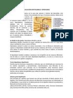 Regulación hipotalámica-hipofisiaria