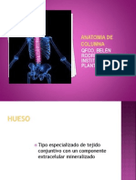 Anatomia de Columna (1)