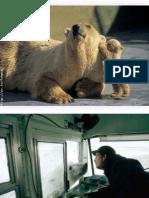 Animais e Emoções