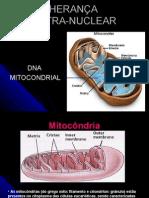 Aula 8 DNA mitocondrial