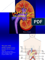 Physiology Urinary System