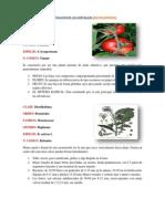 Clasificacion de Las Hortalizas (Dicotiledoneas)