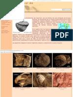 Trigonias - Museo Virtual de Fósiles Patagónicos