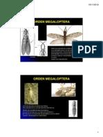 Ento Gen Neuroptera