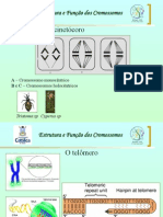 Citogenética Básica Aula 1B