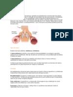 asma.doc