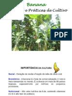 Cultivo de Banana