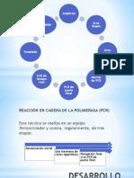 lab.pptx