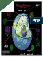Estrutura de DNA e RNA