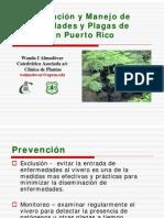 Identificacion y Manejo Plagas Arboles