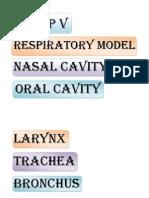 Respiratory Model
