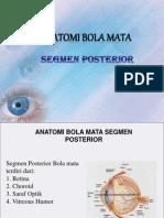 Anatomi Mata Posterior