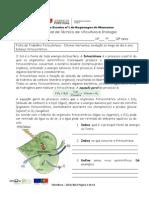Ficha de Trabalho 19 Fotossíntese- Fatores Limitantes