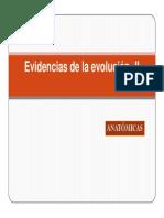 Evidencias de La Evolución -II Homología Analogia