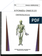 Anatomia Onului Oteologie