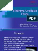 Sindrome Ureico Felino