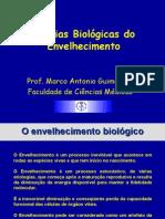 Teorias Biológicas Do Envelhecimento