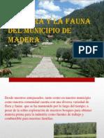 La Flora y La Fauna Del Municipio De