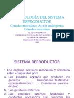 Fisiologia Del Sistema Reproductor