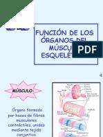 Funcion Organos
