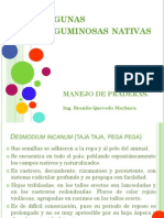 leguminosas nativas