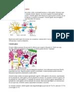 Tipuri de Neuroni Si Celule Gliale