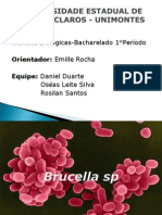 Brucella