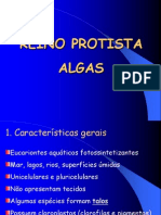 Algas ppt