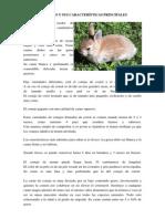 El Conejo y Sus Características Principales
