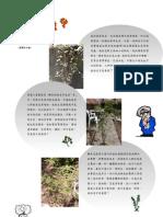 香港醫學博物館草藥園工作紙zone A 大功園