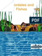 Chordates and Fishes.htm